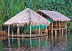 Travel in the tropical Tatai river in cambodia