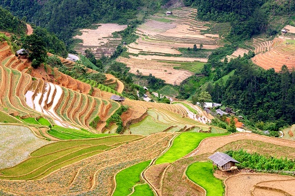 discover-the-beauty-spots-of-muong-lo-nghia-lo-and-mu-cang-chai